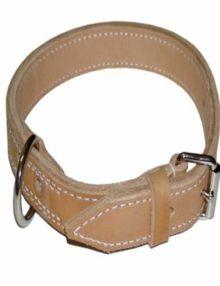 Dog-Collars1